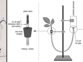 Transpiration with a Potometer