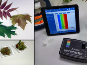 Leaf Absorption Spectra with the Wireless Spectrometer